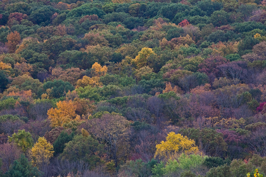 fall trees. new jersey leaves. changing colors in the fall. wildlife photographer.