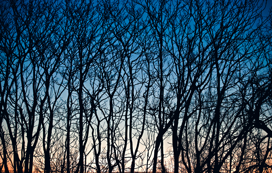 tree photography. sunrise photo. gradient. blue sky. nature photo. photographer. photography.