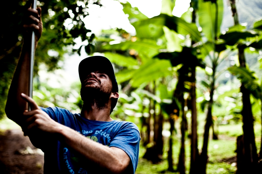fruit farming. fruit picker. josie graves. tahiti. lifestyle. surf lifestyle. travel. photographer. portrait.
