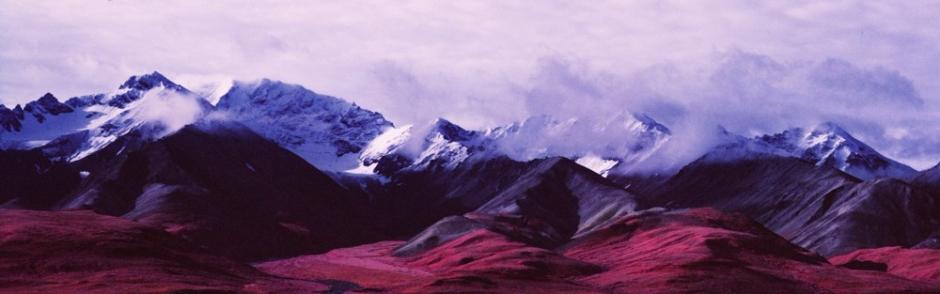 alaska. denali. national park. landscape
